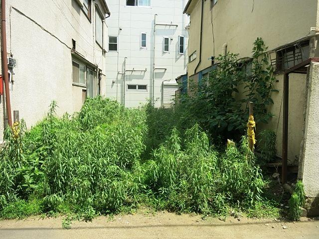 空き地に様々な雑草が